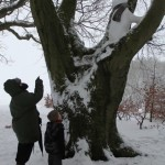 Percival the Snowman climbing a tree