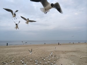 Beach and the seaguls