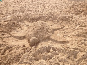turtle made during the sand sculpture workshops