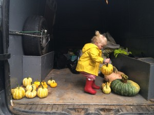 Busy sorting the pumpkins to be carved