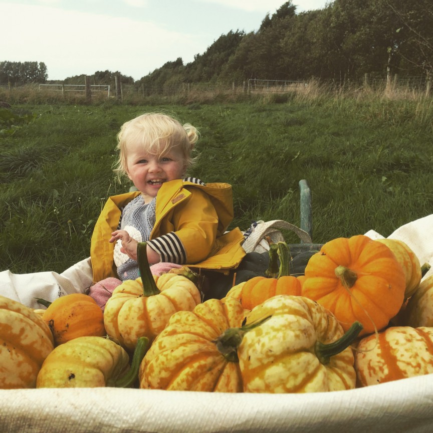 Fun at the farm picking pumpkins