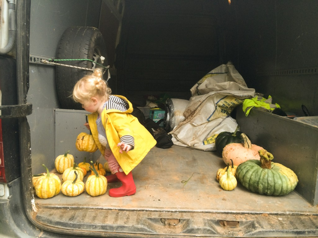 Loading pumpkins into the van