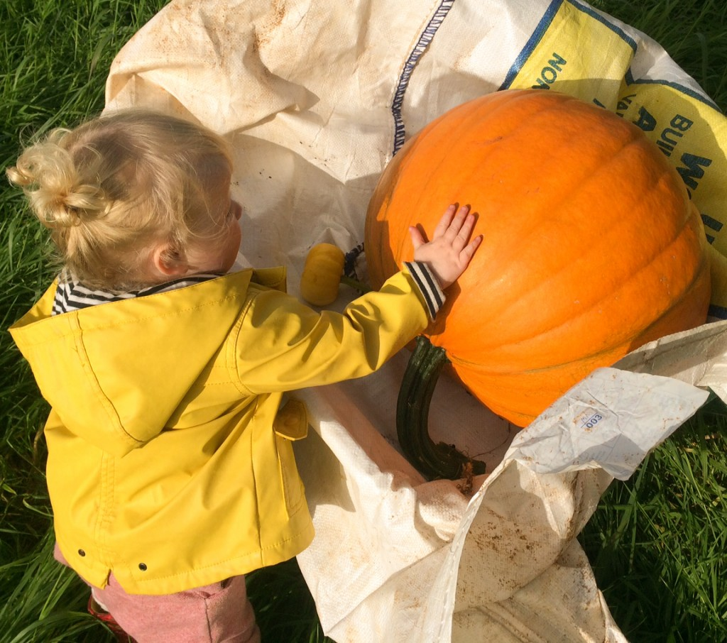 All pumpkins have to pass Florence's pat of approval