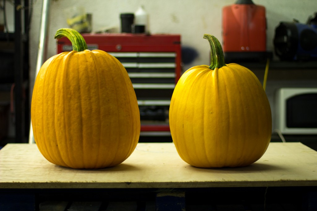 Pumpkins to be carved