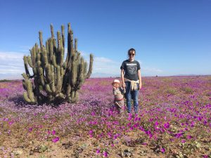claire_jamieson_florence_wardley_flowering_desert_chile