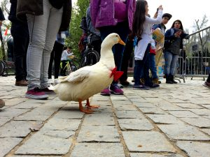 duck_pet_chile_hecho_en_casa_fest