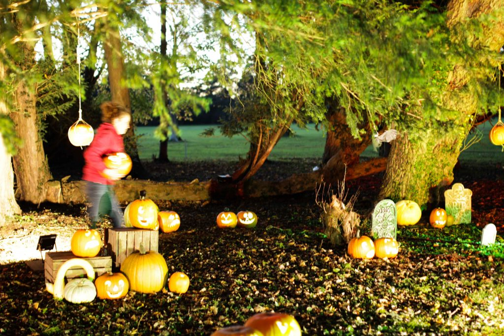 professional pumpkin trails uk